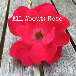 All About: Rose